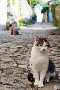 chats_ruelle_mirmande