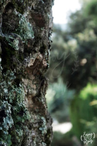 arbre_var