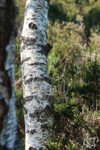 arbres_gorgesapremont