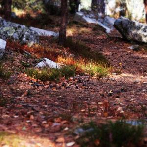 automne_foret_barbizon