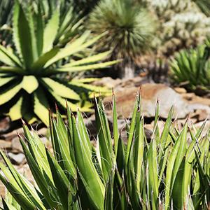 cactus_jardinsrayol