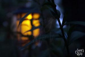 nuit_jardin_cliou