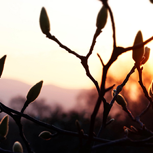 Coucher de soleil sur les Magnolias