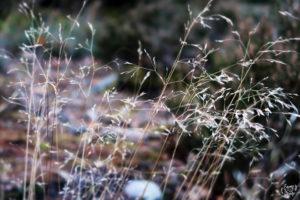 herbes_folles