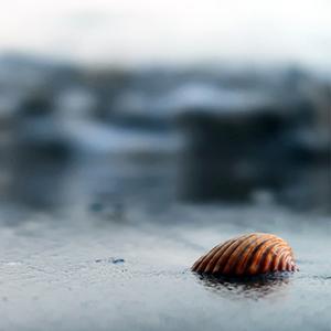 Un coquillage et la mer