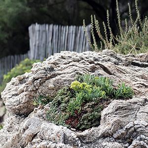 La nature fait surface
