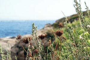 paysage_mer_fleur_sentier_littoral