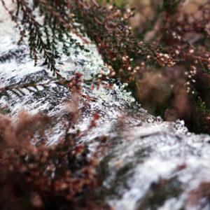 texture_ecorce_foret_automne_hotte