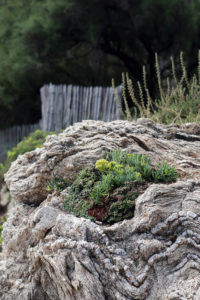 texture-roche-sentier-du-littoral