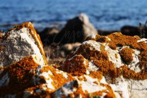 bord_mer_sentier_roche-orange