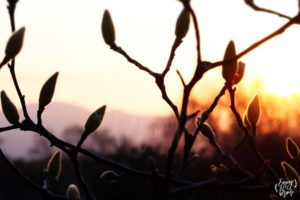 detail_arbre_goldenhour_drome