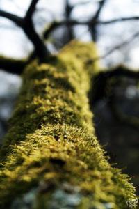 detail_mousse_arbre_hottee