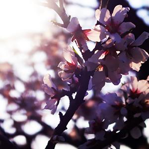 fleur-citadelle-saint-tropez
