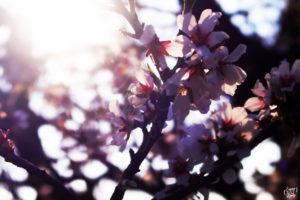 fleurs-saint-tropez