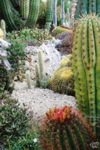 cactus_jardin_eze