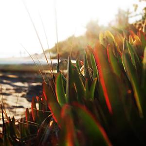photo_soleil_plage_surf
