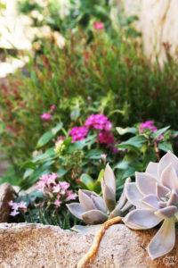 fleurs_grimaud