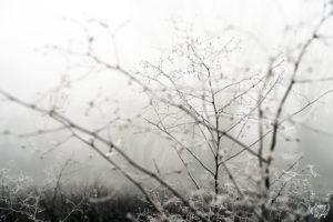 paysage_hiver_champ_cliou