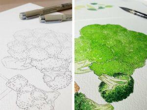 encrage-couleur-brocolis